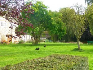 Our new garden..