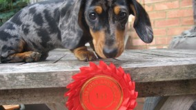 Willow with her first rosette