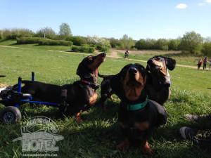 Elvis & me mates Stanley & Ollie