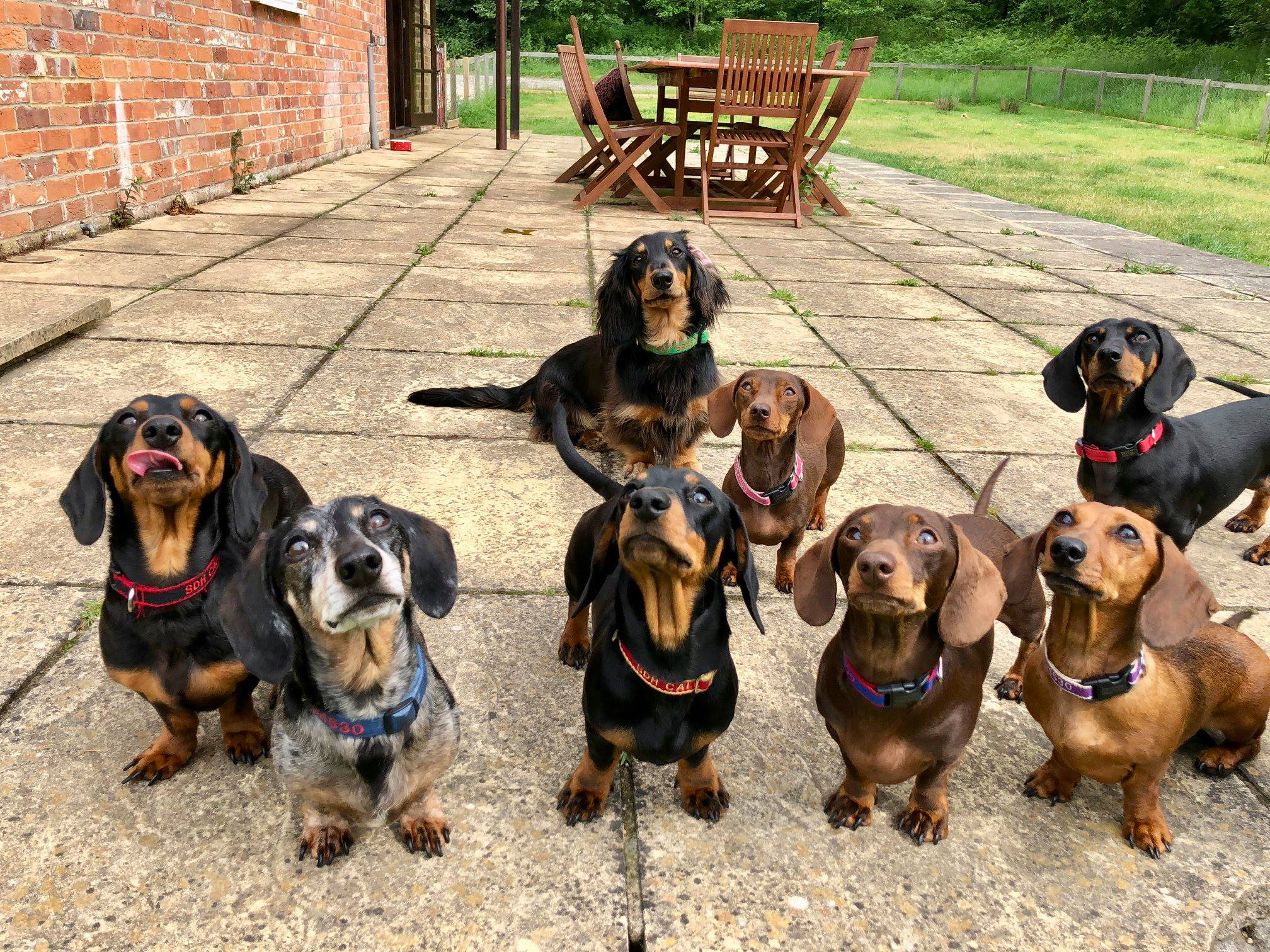 Image of: Cutest Sausage Photo Gallery De Kinderplaneet Sausage Dog Hotel