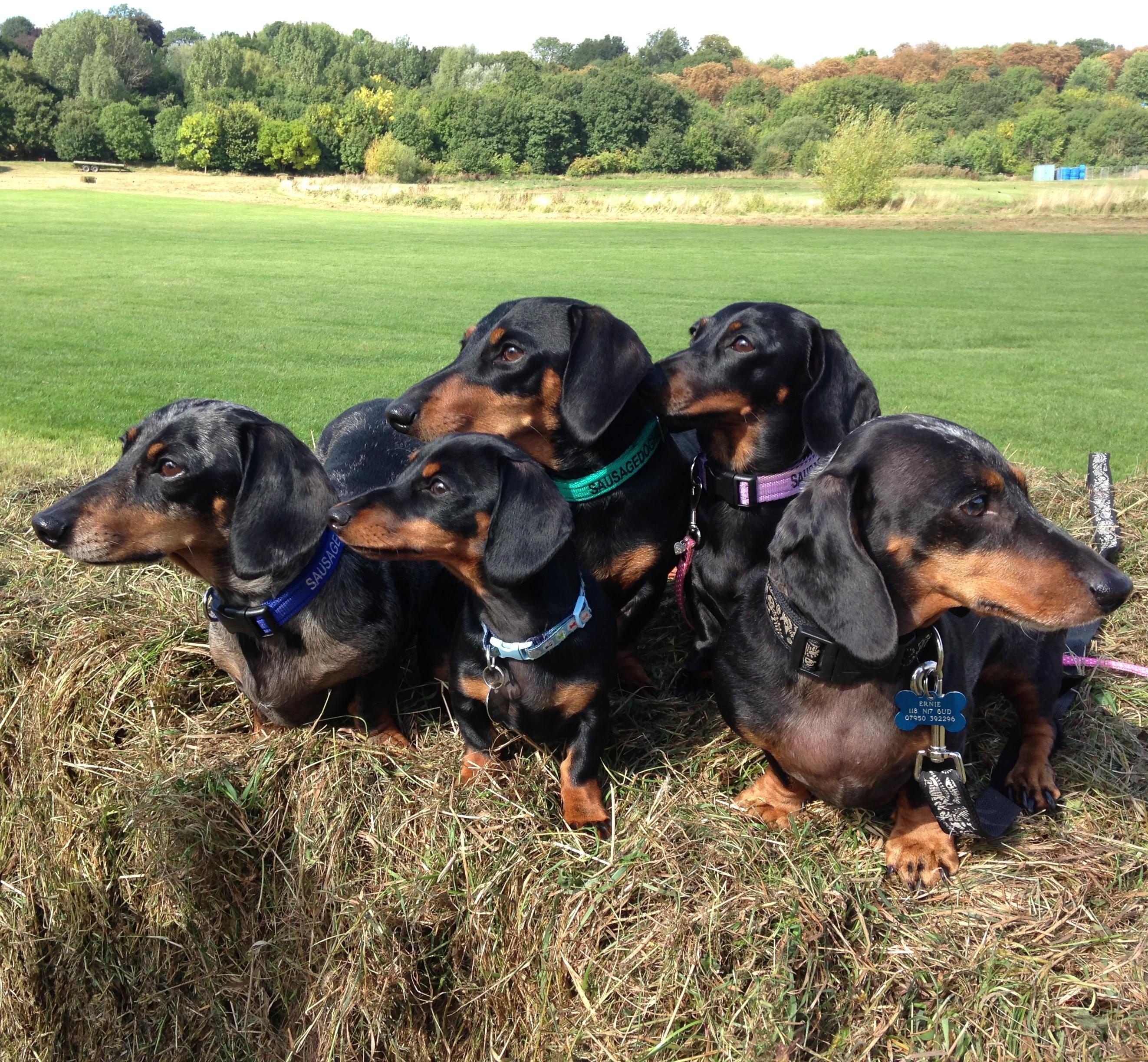 Enclosed Dog Parks Hertfordshire